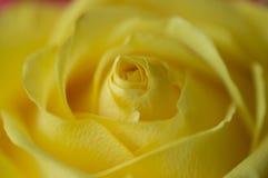 Gratitud en amarillo foto de archivo