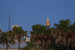 Grattacieli e Sydney Tower di Sydney CBD veduti da Pyrmont Immagine Stock Libera da Diritti