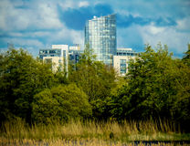 Grattacielo in alberi Fotografie Stock