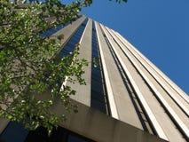 Grattacielo con l'albero Immagini Stock