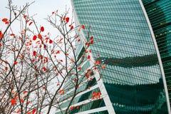 Grattacielo con la facciata di vetro nell'inverno Vista astratta del primo piano moderno della costruzione Fotografie Stock