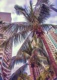 Gratte-ciel grands, passages couverts et beaux palmiers Palmiers plantés le long de la route, les tropiques Image stock
