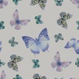 Grau des Schmetterlinges 08 Lizenzfreies Stockbild