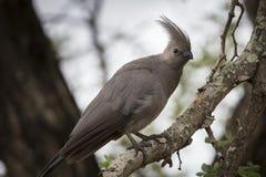 Grau gehen Vogel weg lizenzfreies stockfoto