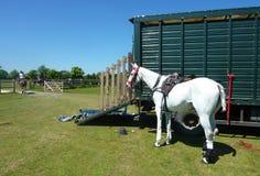 Grau gesatteltes Pferd begrenzt zum Viehwagen lizenzfreie stockbilder