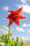 Grau Lily Against Blue Sky Vertical Stockfotografie