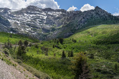 Grau-Spitze in Ost-Nevada Stockbilder