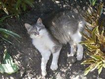 Grau-weiße Katze liegt unter den Blumen Lizenzfreies Stockbild