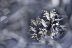 Grau-weißer mit Blumenhintergrund Wildflowers weiß auf einem blured bokeh Hintergrund Nahaufnahme Weicher Fokus Stockbild