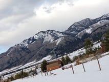 Graubär-Erfahrung lizenzfreie stockfotos