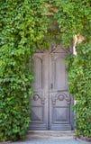 Graue alte Tür mit Efeu Lizenzfreie Stockfotos