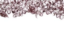 Graue Burgunder-Blumen Handdes gezogenen Holzkohlenbekantens der pulm Blüten und der Blätter, der Blumenblätter und der Knospen i stockfotografie