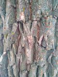 Graue Farbe der Naturholzbeschaffenheit stockfotografie