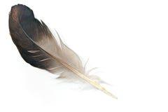 vogelfeder lokalisiert stockbild bild von nahaufnahme 52492321. Black Bedroom Furniture Sets. Home Design Ideas
