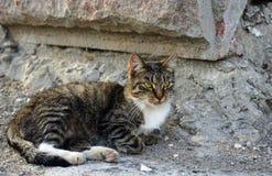 Graue gestreifte Katze auf einem Steinwandhintergrund lizenzfreies stockfoto