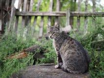 Graue gestreifte Katze auf einem Stumpf Stockfotografie