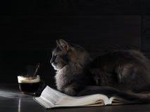 Graue große Katze liegt auf dem offenen Buch Lizenzfreie Stockfotos