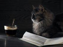 Graue große Katze liegt auf dem offenen Buch Lizenzfreies Stockfoto