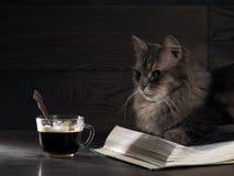 Graue große Katze liegt auf dem offenen Buch Stockfotografie
