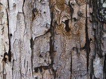 Graue hölzerne Barkenbeschaffenheit mit Sprüngen Brettoberfläche des rohen Holzes Rustikales Bauholznahaufnahmefoto Lizenzfreies Stockbild