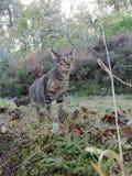 Graue Katze lizenzfreies stockfoto