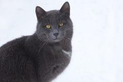 Graue Katze Stockbild
