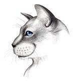 Graue Katze stock abbildung