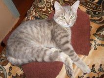 Graue Katze auf dem Bett Lizenzfreie Stockfotografie