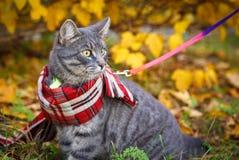 Graue Katze auf einem Weg im Herbstpark stockbilder