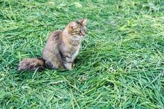 Graue Katze auf Gras Stockfotos
