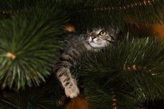 Graue Katze auf Weihnachtsbaum stockfoto