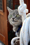 Graue Katze auf Yacht Stockfotografie