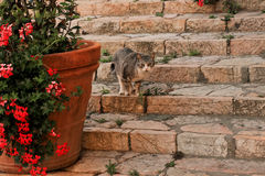 Graue Katze betrachtet Sie Lizenzfreie Stockfotos