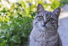 Graue Katze der getigerten Katze auf einem Hintergrund der Natur stockbilder