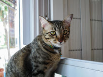 Graue Katze der getigerten Katze sitzen neben Fenster stockbilder