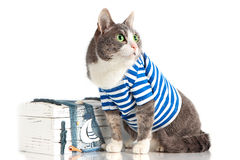 Graue Katze in der Matroseklage auf lokalisiertem Hintergrund mit Kasten Stockfotografie