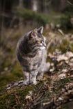 Graue Katze in der Natur Lizenzfreie Stockfotos