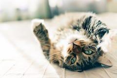 Katze, die auf Bett liegt Stockfotografie