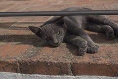 Graue Katze, die auf der Straße untersucht Kamera liegt Lizenzfreies Stockbild