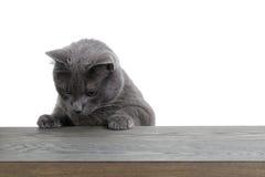 Graue Katze, die auf hölzerner Planke schaut Lizenzfreies Stockfoto