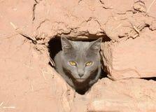 Graue Katze, die durch ein Loch in einer Schlammwand schaut Lizenzfreies Stockbild