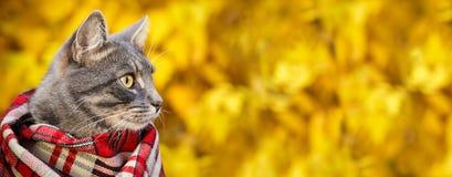 Graue Katze in einem karierten Schal auf Herbsthintergrund lizenzfreies stockbild