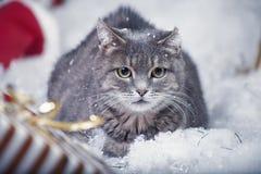 Graue Katze in einem Stuhl Stockfotografie