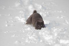 Graue Katze fest im Schnee lizenzfreie stockfotografie