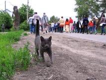 Graue Katze geht in Richtung zur Menge des Leutegehens lizenzfreies stockfoto