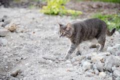 Graue Katze im Garten Stockbild