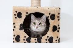 Graue Katze im Katzehaus getrennt Stockfotos