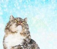 Graue Katze im Winter, der Schneefall betrachtet Stockbild