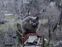 Graue Katze mit gelben Augen Stockfotos