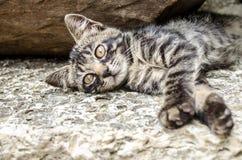 Graue Katze mit orange Augen, Lizenzfreie Stockfotos